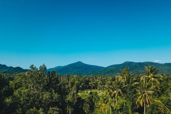 Landscape - Coco Lilly Photo