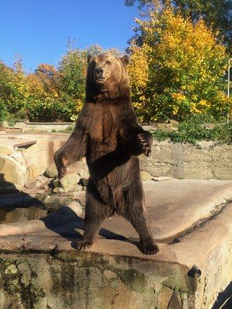 Калининградский зоопарк: Мишка !