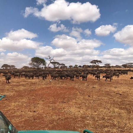 Tarangire National Park, تنزانيا: photo9.jpg
