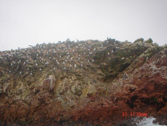 Ica Region, Περού: Islas Ballestas, Pisco