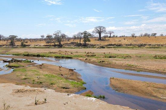 Rajatours: Ruaha Riverbed in Dry Season