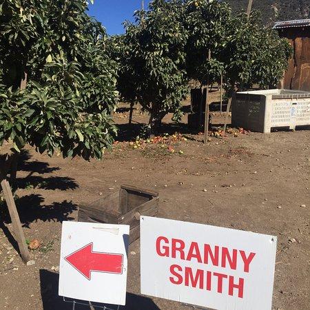 Rileys at Los Rios Rancho: photo2.jpg