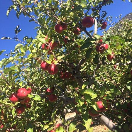 Oak Glen, CA: photo5.jpg