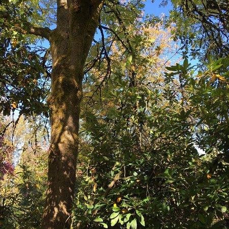 Kenmore, WA: photo2.jpg