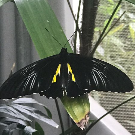 Butterfly Rainforest: Beautiful butterflies!