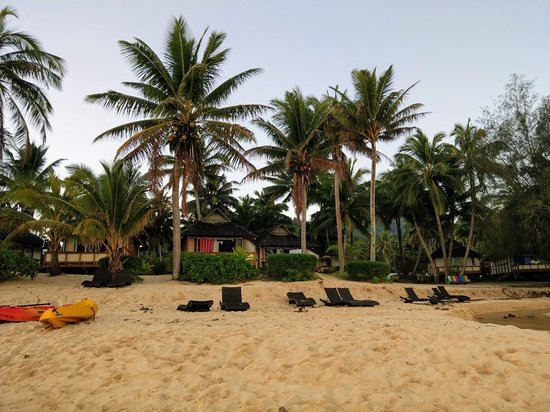 Palm Grove: IMAG2490_large.jpg