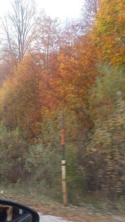 Domanic, Turquía: Yeşil Kırmızı Sarı Ağaçlar, Sis&Güneş, Nefis Çesmeler