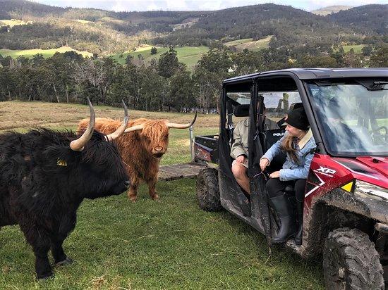 Highland Getaway