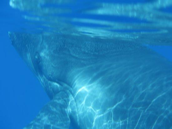 TOPDIVE Tahiti: Au revoir baleineau, pour moi, tu resteras inoubliable, longue et heureuse vie à toi