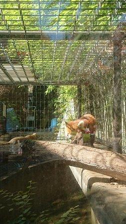 Chiba Zoo Park