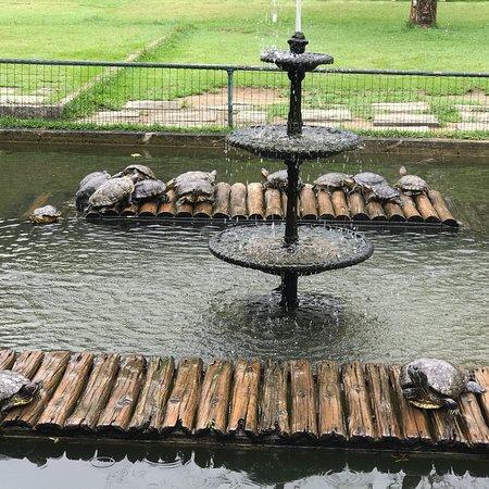 Jardim Botânico: photo0.jpg