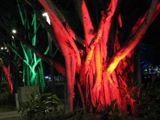 Esplanade Boardwalk: Flood light trees - Eplanade Cairns