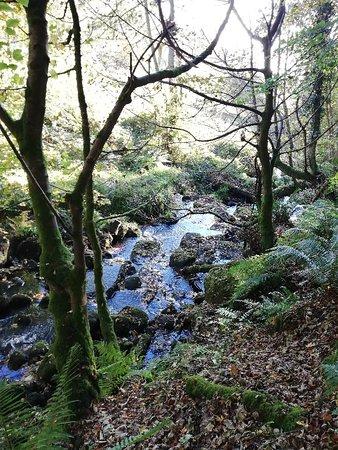Wicklow Mountains Tour: IMG_20181019_105842_large.jpg