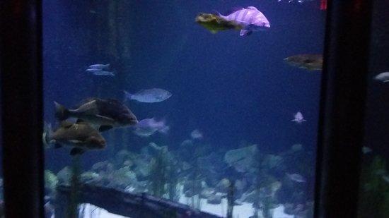 Virginia Aquarium Marine Science Center The Fish Tank