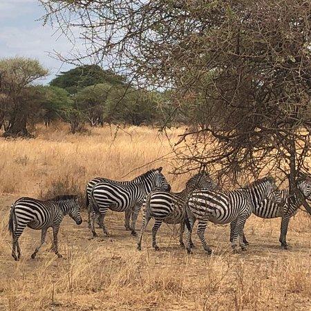 Authentic Africa Adventure