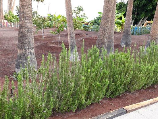 Ogród pachnący rozmarynem