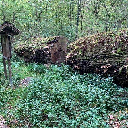 Wachtberg, Alemania: photo8.jpg
