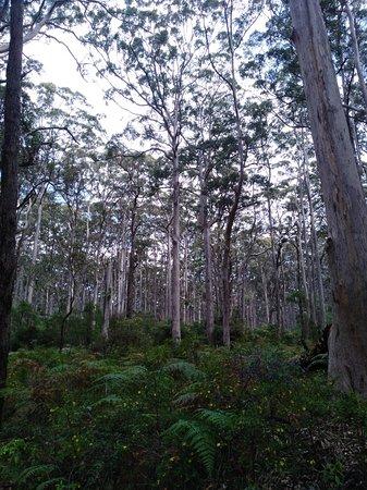 Australia Plains照片