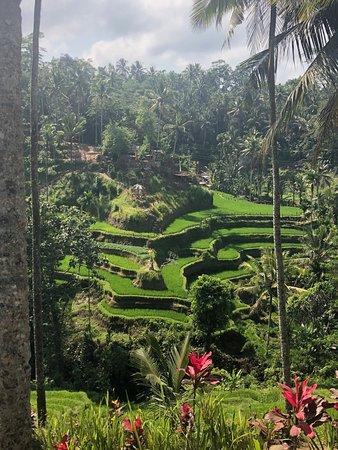 Visit Rice Terrace