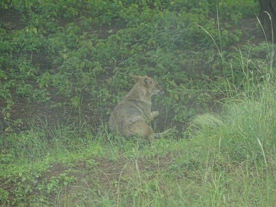 Devalia Safari Park: अच्छा अनुभव ,शांत माहोल