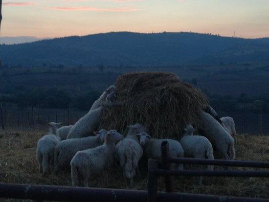 Imagen de Roccalbegna