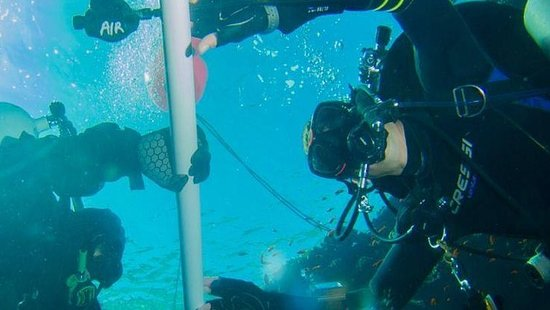 Recreational diving & courses (learn to dive, advanced, +more), dive day trips, dive safari crui