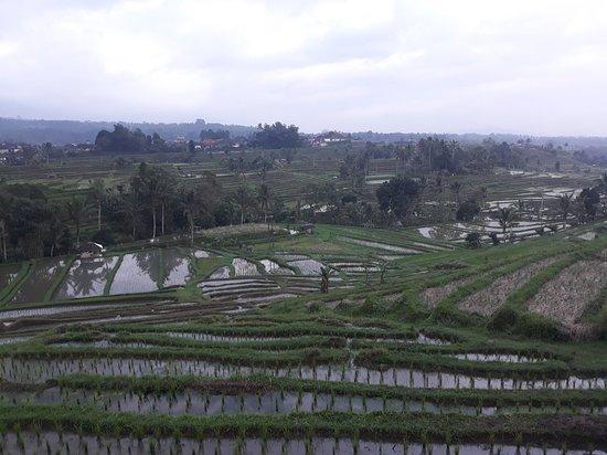 jatiluwih rice terraces at jatiluwih village(middle Bali)