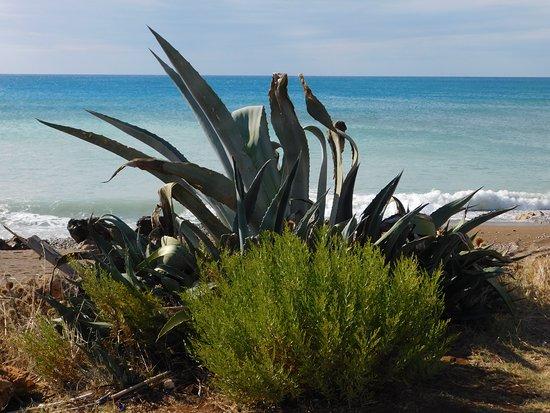 Kalo Nero Beach: Kalo Nero Strand