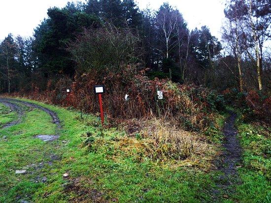 Sidings Lane Nature Reserve