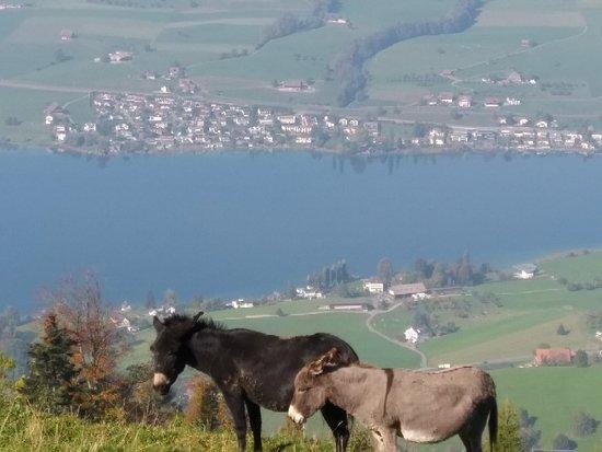 Kuessnacht am Rigi, Suiza: IMG_20181017_123807_large.jpg