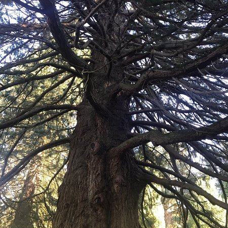 Bedgebury National Pinetum and Forest: photo3.jpg