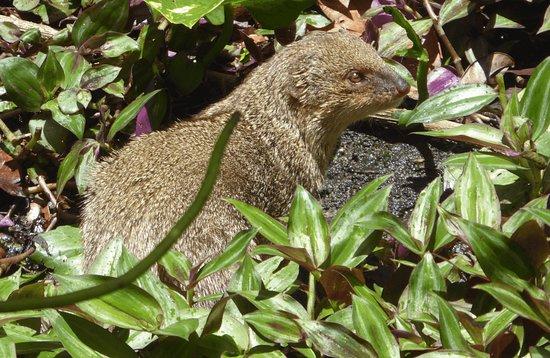 Basse-Terre Island, Guadalupe: Erleben Sie die Natur und den Regenwald, nit Bleu Pearl Service Touristique