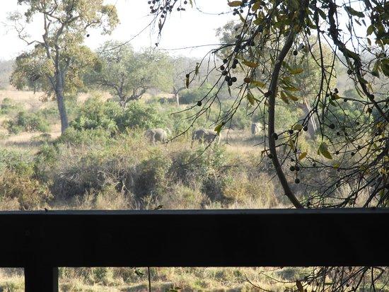 Singita Boulders Lodge: Elephant Walk from Bed