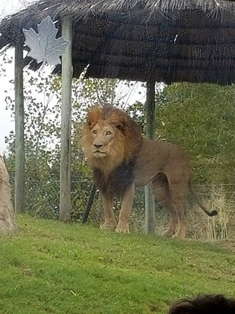 Dallas Zoo: 20181020_103916_large.jpg