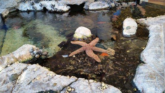 Aquarium in Visitor Center