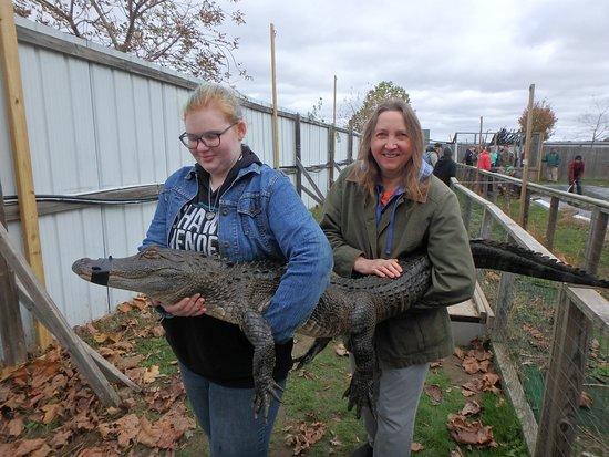 Athens, MI: Some alligators are a two person job