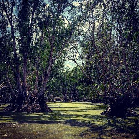 Mary River National Park, Australia: photo4.jpg