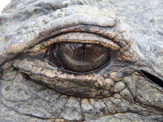 Athens, MI: The soul of an alligator