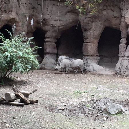 Woodland Park Zoo: Pictures of the zoo