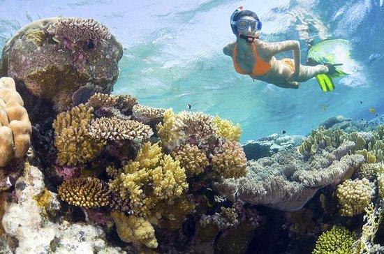 Plongée avec masque et tuba sur l'île...