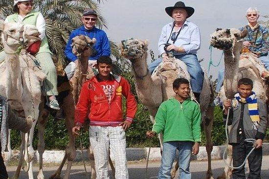 Paardekameel of ezelrit langs de ...