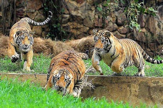 Privat tur til Cali Zoo inklusive...