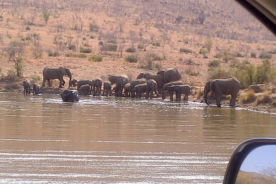 Pilanesberg National Park Day Tour ...