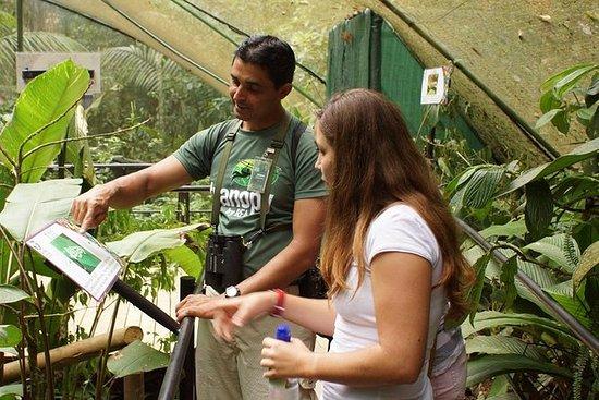 Rainforest Adventures Nature...