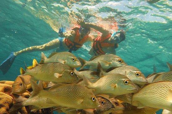 Half-Day Snorkeling Adventure in...