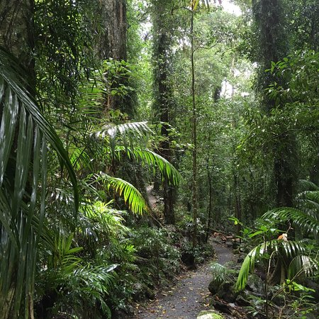Fantastic centre with great rainforest walk