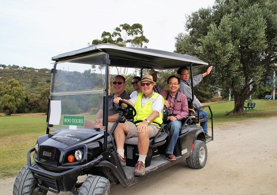 Kangaroo Viewing Tours Anglesea