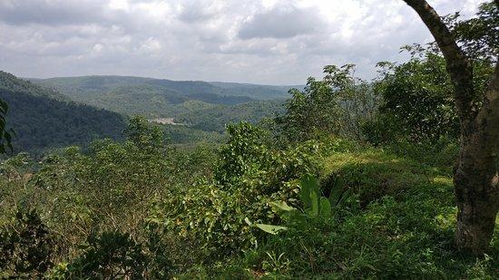 Thonikadavu
