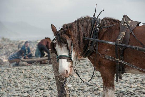 Barrytown, New Zealand: Murphy  waiting patiently