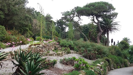 Variety Of Plants Picture Of Tresco Abbey Garden Valhalla